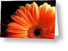 3347-003 Greeting Card