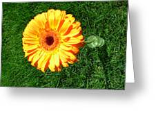 3407 Greeting Card