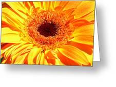 3410-008 Greeting Card