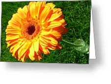 3411-001 Greeting Card