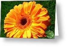 3412-001 Greeting Card