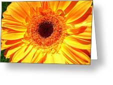 3414 Greeting Card