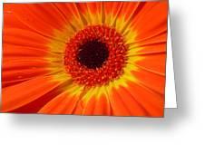 3436-002 Greeting Card
