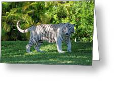 35- White Bengal Tiger Greeting Card