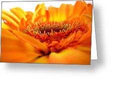 3559 Greeting Card