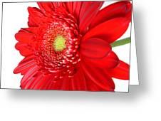 3650 Greeting Card