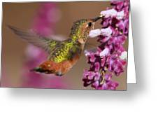 Allens Hummingbird Greeting Card