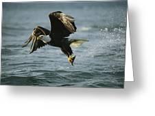 An American Bald Eagle In Flight Greeting Card