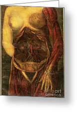 Anatomie Generale Des Visceres Greeting Card