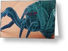 Baby Spider, Sem Greeting Card