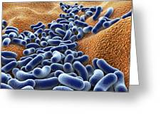 Bacteria, Artwork Greeting Card