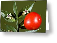 Butcher's Broom (ruscus Aculeatus) Greeting Card