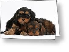 Cavapoo Pups Greeting Card