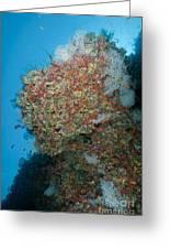 Colourful Reef Scene, Ari And Male Greeting Card
