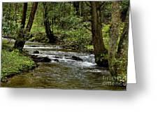 Craig Run Monongahela National Forest Greeting Card