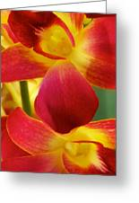 Dendribium Malone Or Hope Orchid Flower Greeting Card