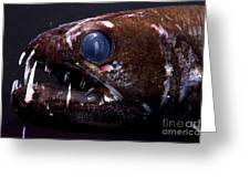 Dragonfish Greeting Card