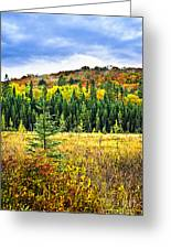 Fall Forest Greeting Card
