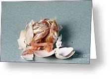 Hatching Chicken Greeting Card