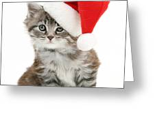 Maine Coon Kitten Greeting Card