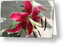 Orienpet Lily Named Scarlet Delight Greeting Card