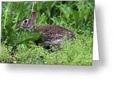 Rabbit Greeting Card