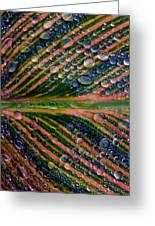 Raindrops On Lily Leaf Greeting Card