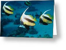 Red Sea Bannerfish Greeting Card