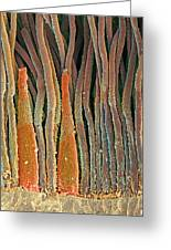 Retina Rod And Cone Cells, Sem Greeting Card