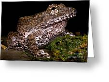 Rusty Robber Frog Greeting Card