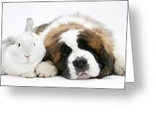 Saint Bernard Puppy With Rabbit Greeting Card