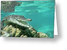 Saltwater Crocodile Crocodylus Porosus Greeting Card by Mike Parry