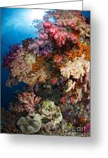Soft Coral In Raja Ampat, Indonesia Greeting Card