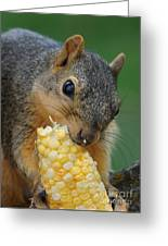 Squirrel Eating Sweet Corn Greeting Card