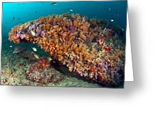 Tropical Reef, Indonesia Greeting Card