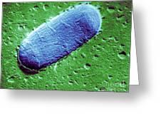 Tuberculosis Bacillum Greeting Card