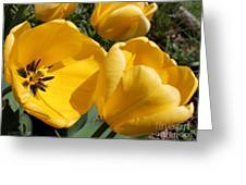 Tulip Named Big Smile Greeting Card