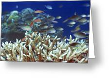 Underwater Landscape  Greeting Card