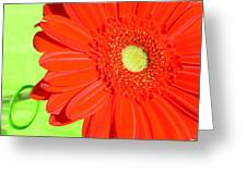 4005-002 Greeting Card
