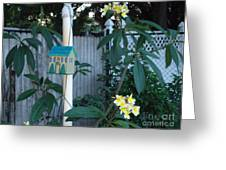 415 Premeria On Fence Greeting Card