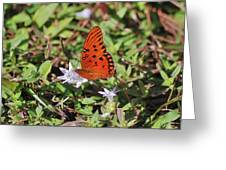 42- Fritillary Butterfly Greeting Card
