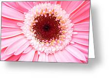 4256 Greeting Card