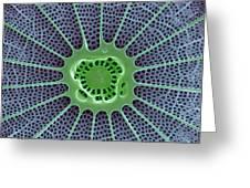 Diatom, Sem Greeting Card