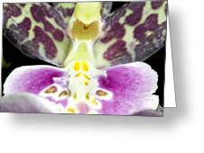 Exotic Orchids Of C Ribet Greeting Card by C Ribet