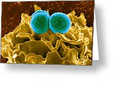 Methicillin-resistant Staphylococcus Greeting Card