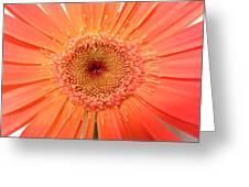 4955 Greeting Card