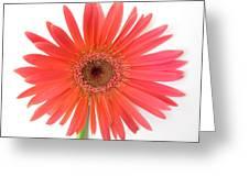 4961 Greeting Card