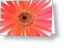 4964 Greeting Card