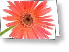 4989 Greeting Card