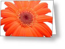 4991 Greeting Card